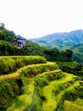 #voyage: banaue & batad rice terraces, philippines